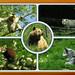 2019-05-22 Parc Animalier Ste Croix Rhodes (57) [Mer 22 Mai 2019]