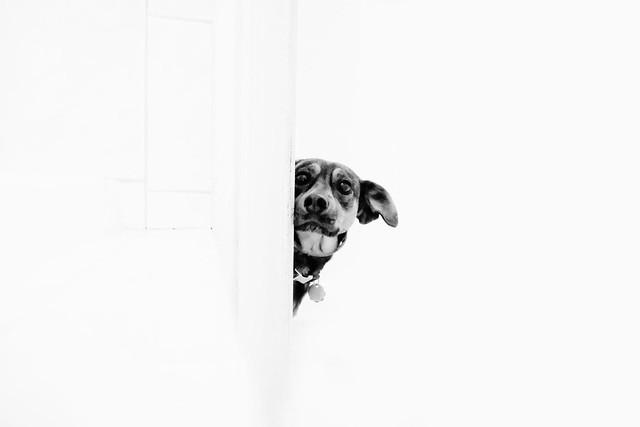 high key hound