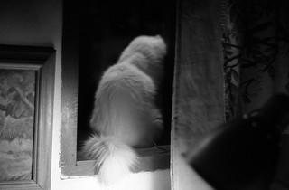 Il fantasma di Flickr
