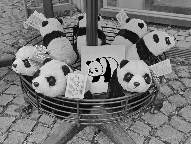 #goodpandacontest flickr panda meeting the plushy Pandas at the shop of the Zoo Tiergarten Schönbrunn