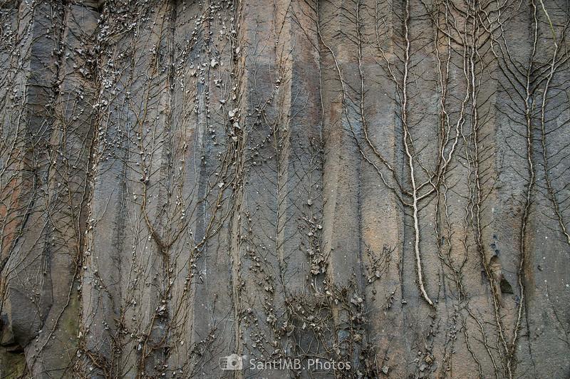 Restos de hierda sobre la pared de los riscos de Fontfreda