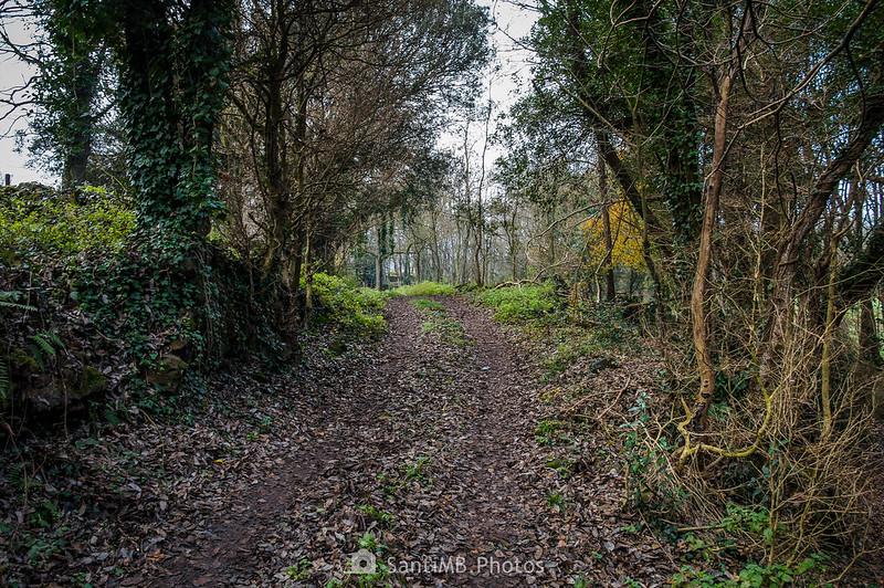 Camino que sube a Can Xervanda desde los Prats de Can Xervanda