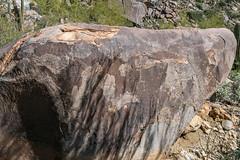 1903 Petroglyphs above Wild Burro Canyon 02