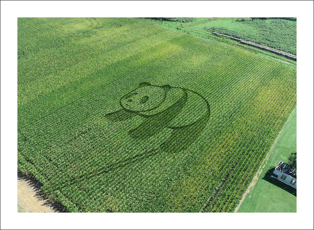 Panda Crop Circle