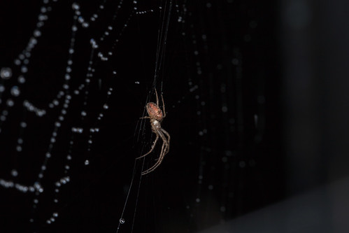 Spider Among the Stars - _TNY_7750 (In Explore 26/5 2019)