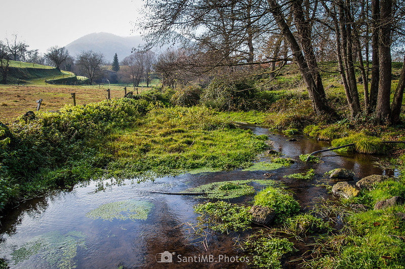 Humedal del Verlets a la altura de la Font de Fontfreda