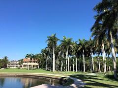 Deering Palms