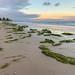 Seaweed on Glenelg Beach