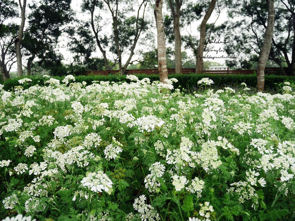 苗栗三義一日遊景點推薦雅聞香草植物工廠免門票夢幻玫瑰花園觀光工廠 (5)