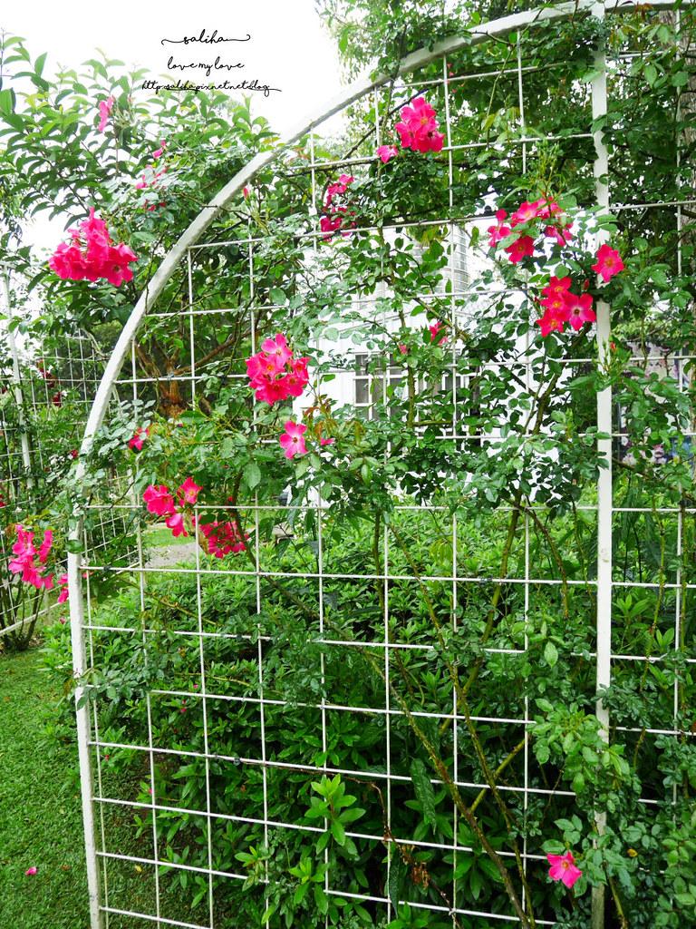 苗栗三義一日遊景點推薦雅聞香草植物工廠免門票夢幻玫瑰花園觀光工廠 (2)