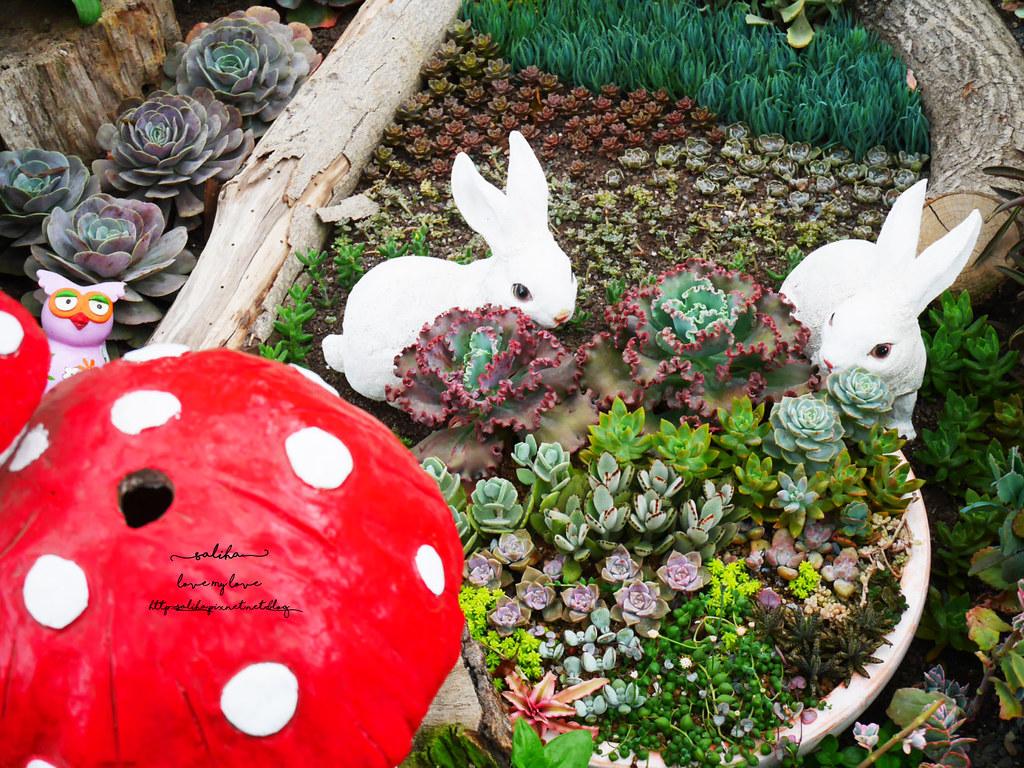 苗栗三義雅聞香草植物工廠好玩好拍親子景點夢幻花園 (3)