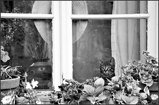 Behind my window