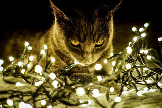 Ligth cat