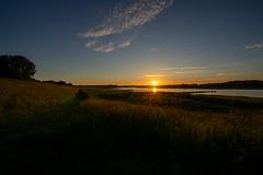 Mosquito sunset
