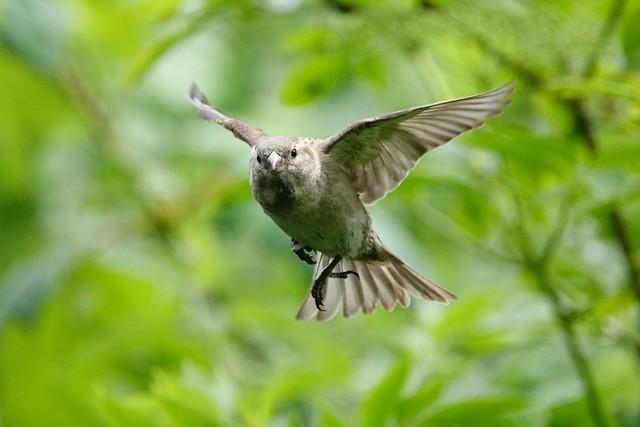 The matrix sparrow