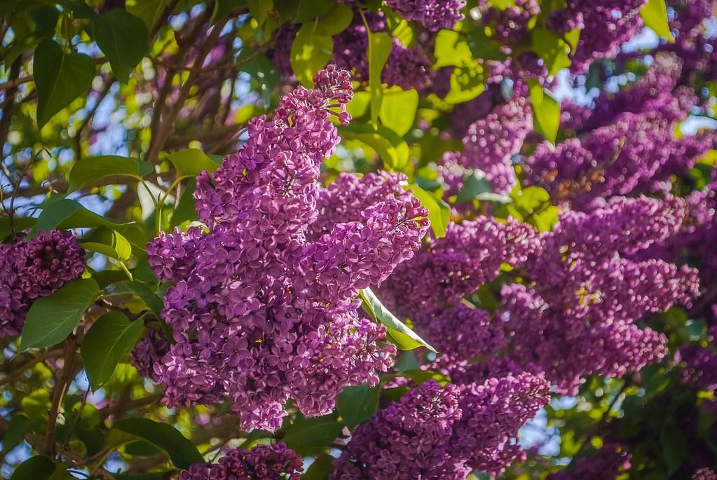 Beautiful flowers ! DSC_3180