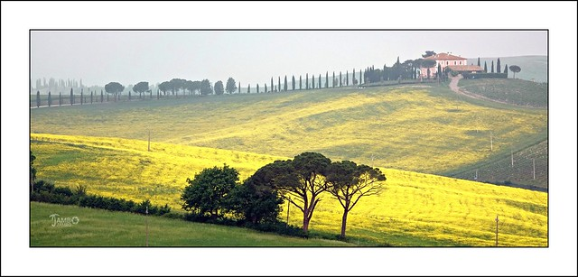 Cercando primavera, un po' Jambo e un po' Gogh. (2)