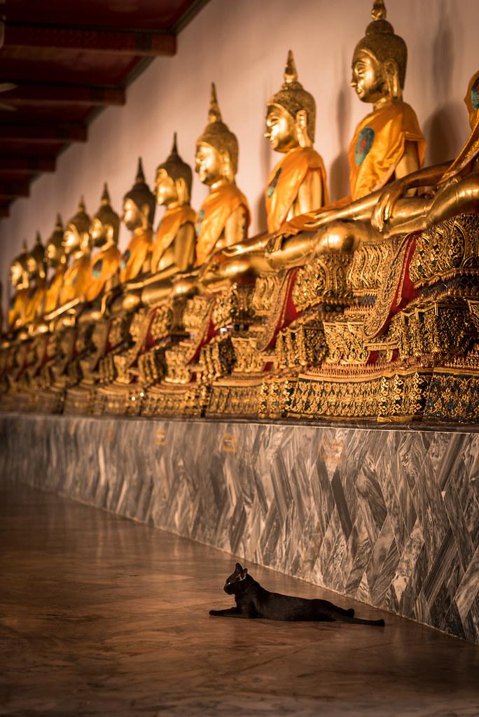 Le chat garde les statues du Wat Pho