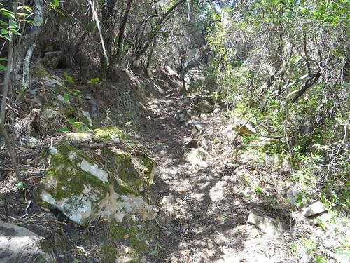 Le chemin après la carbunara : la partie encore à nettoyer