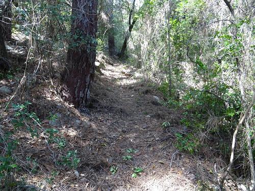 Le chemin après la carbunara : la partie encore à ratisser