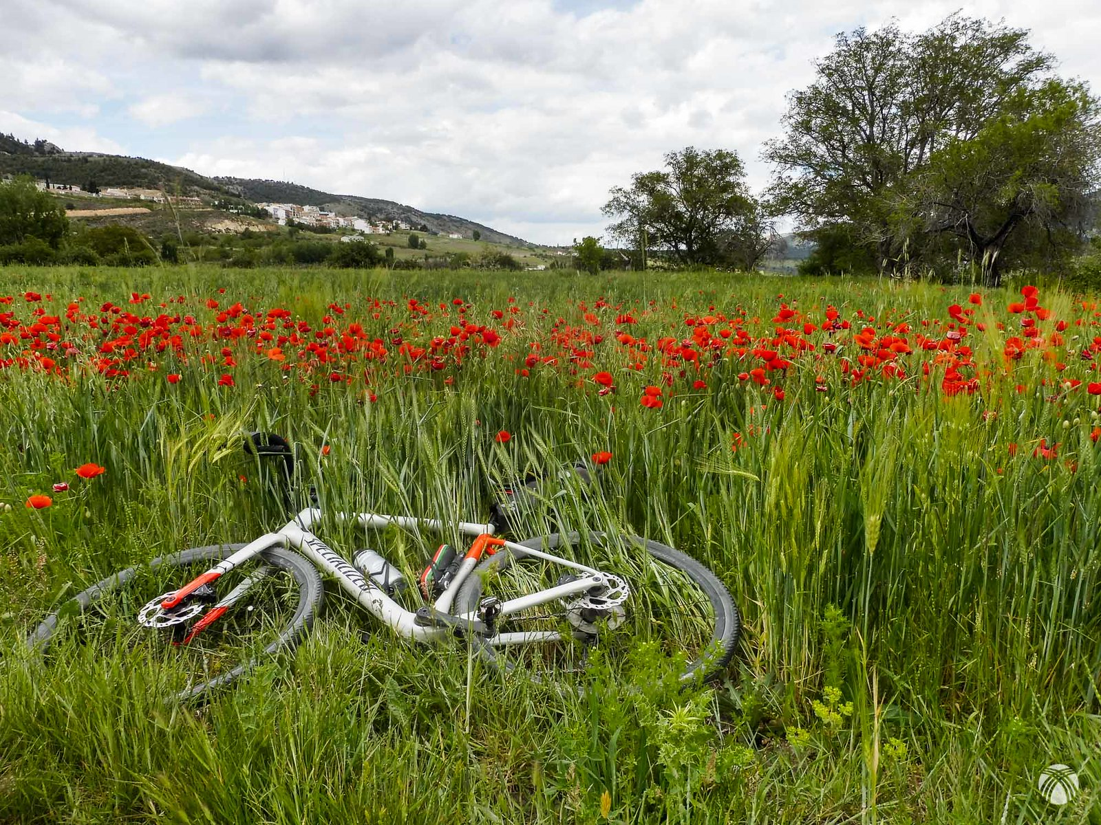 Primavera en la Vega de Santiago