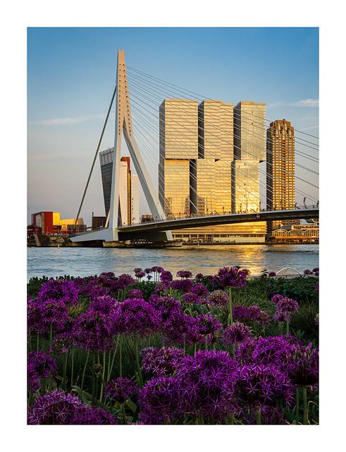 Kop van Zuid Rotterdam in spring