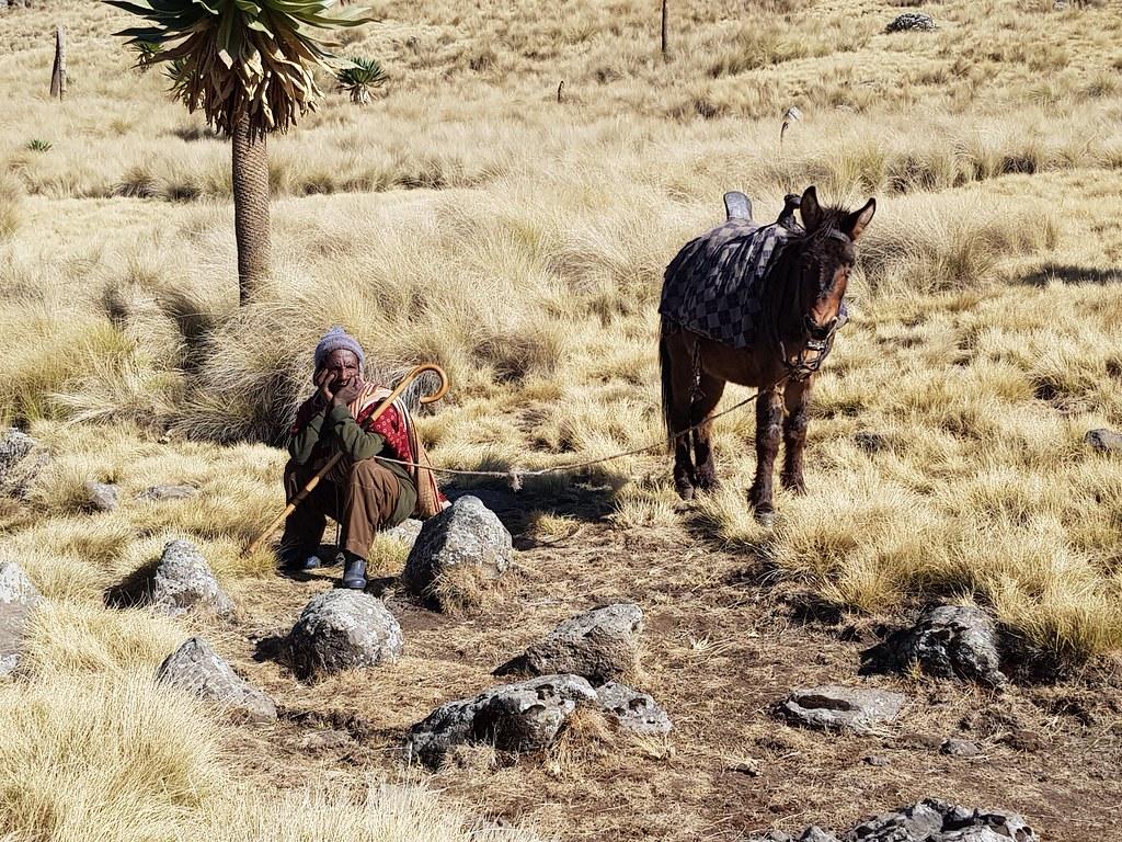 Góry Simien, trasa na Imet Gogo