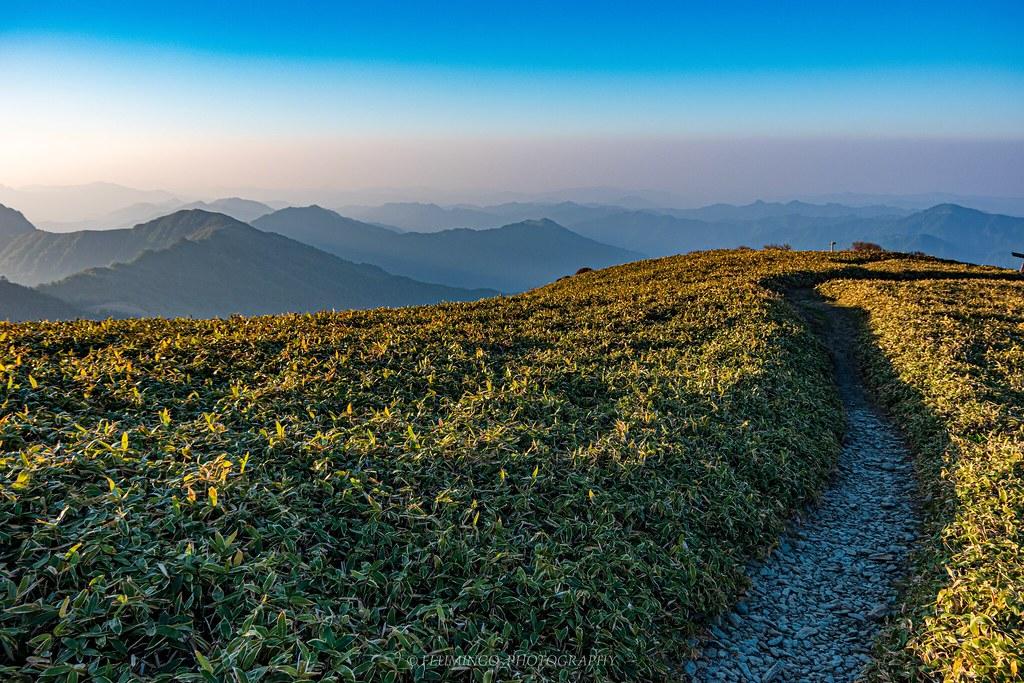 笹が広がる四国山地