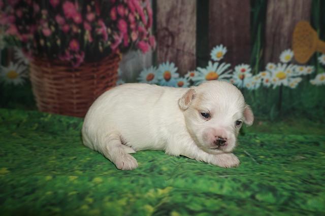 1 Nino 1 lb 2 weeks old (19)
