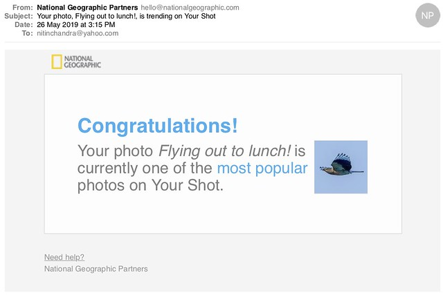 Your photo Flying out to lunch is trending on Your Shot