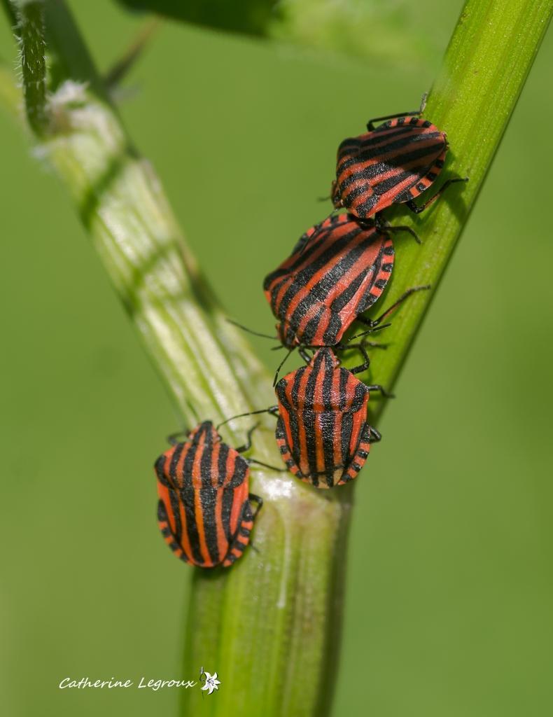 Macros/  proxi/  insectes  - Page 31 47936675351_0c492d9493_o