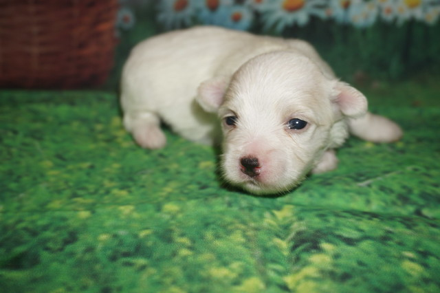 3 Hola 15.2 oz 2 weeks old (15)