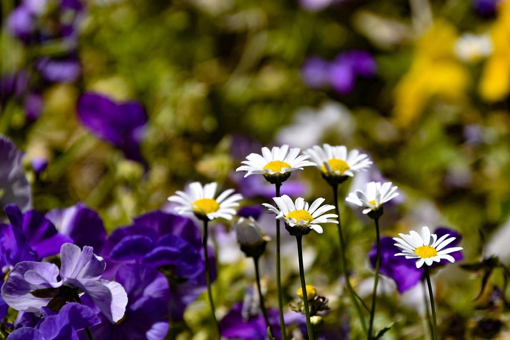 Primaveral...