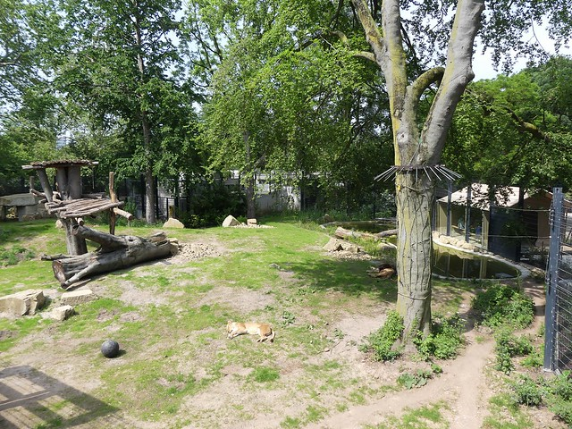 Zoo Heidelberg - Löwenanlage