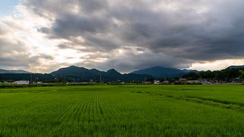 asia cloudy japan miyagiprefecture narukoonsen rice ricefields ricepaddies ricepaddy sunrays sunbeams sunset osakishi