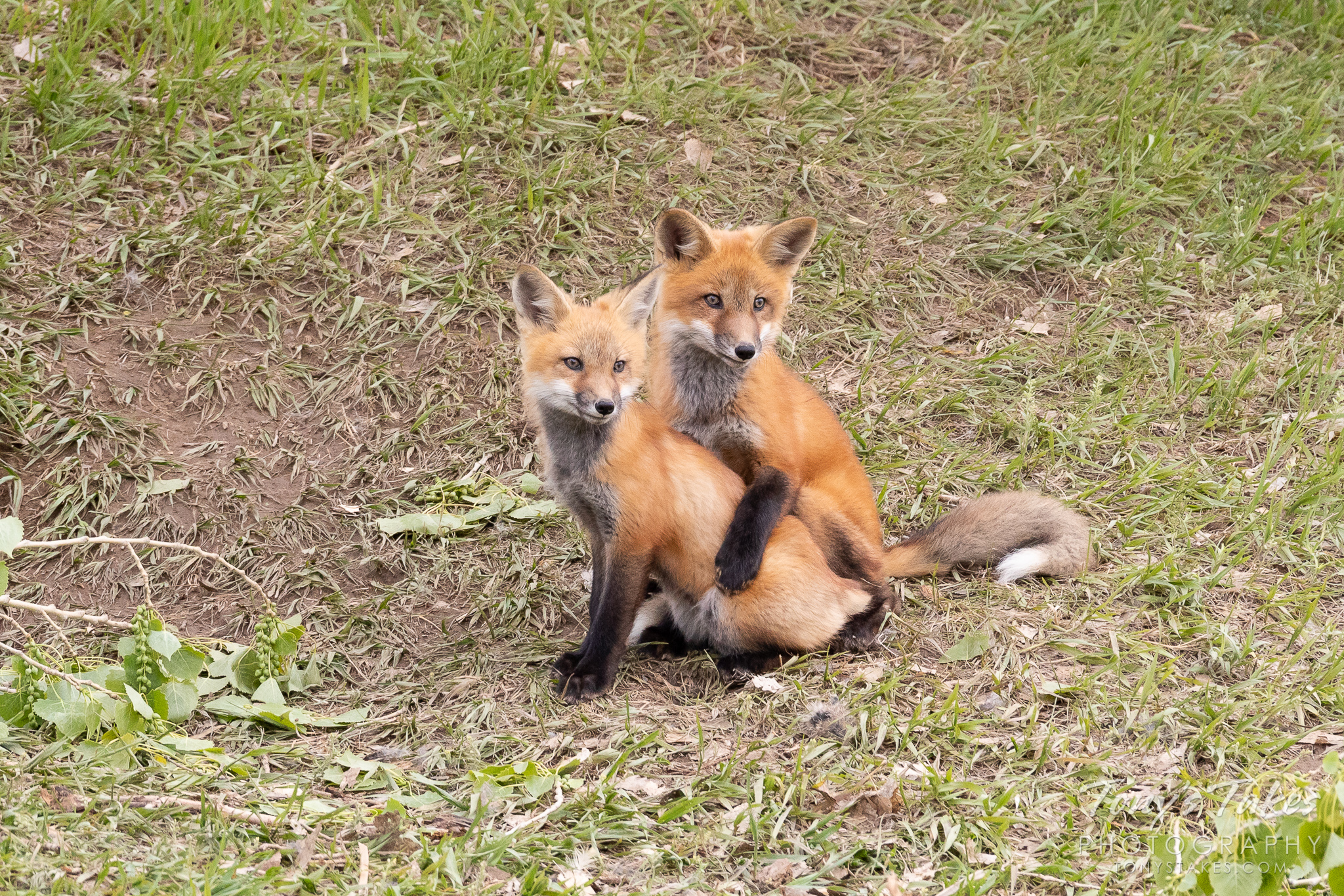 Fox sibling love to bring a smile on Fox Friday
