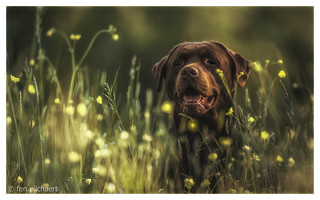 lizzy - wrapped in buttercups | by fen pilchaert