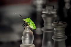 Check bug