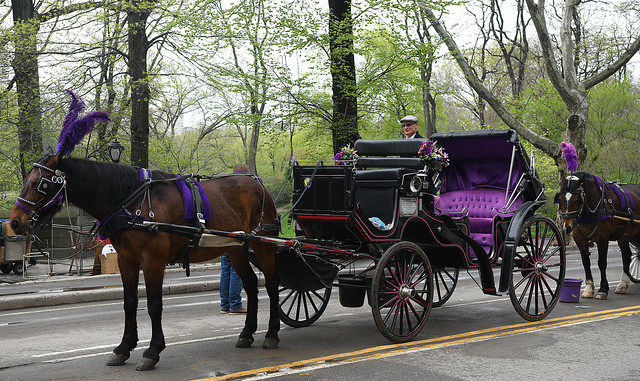 Central Park Carriages for Hire!