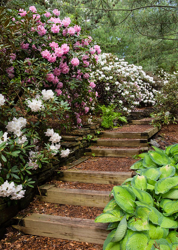 Rhododendron Hill