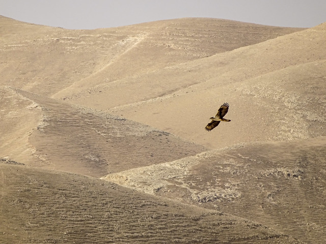 Day 8g -  on that day the eagles were migrating