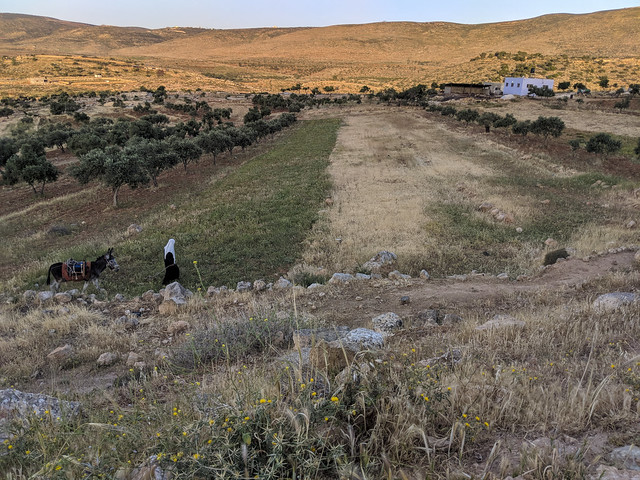Day 6c -   a woman goes alone to the fields outside of Duma