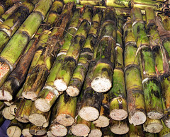 Sugar cane for sale in a market in Mexico