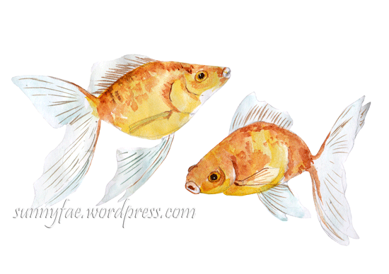 fan tailed goldfish painted with watercolour
