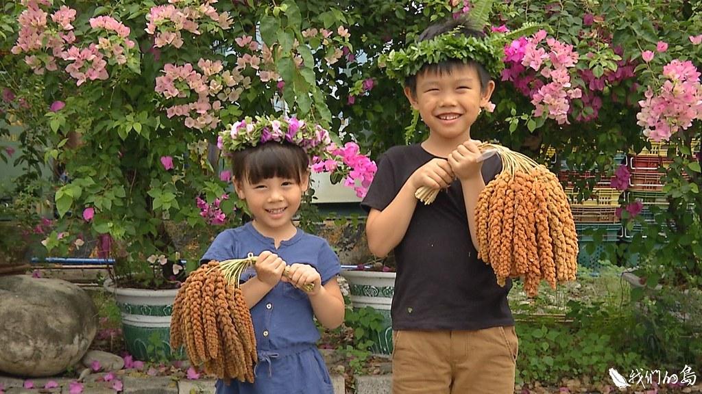 2019年5月4日,屏東長治百合園區的小米採收體驗活動。