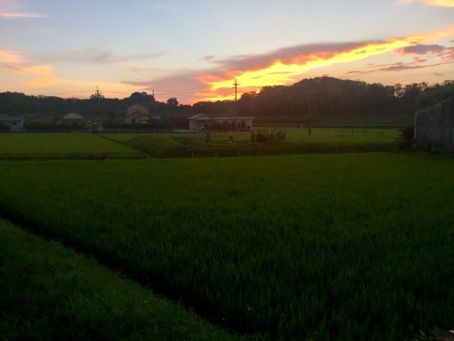 koryo apartment field