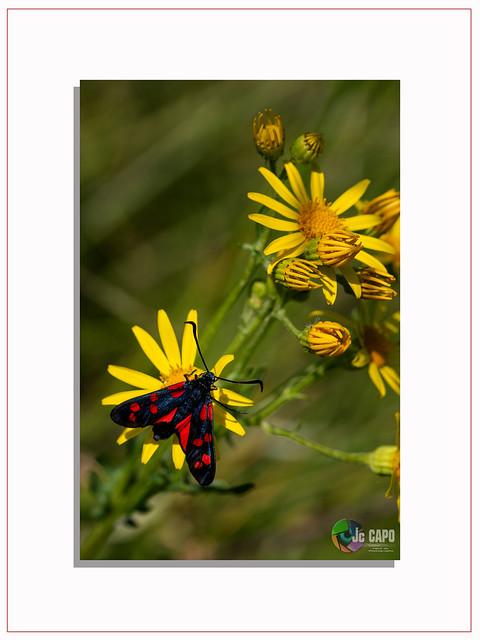 """""""L'oeuvre d'art est à l'historien d'art ce que le papillon est à l'entomologiste.""""    De Pierre Rosenberg"""