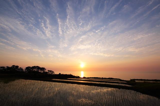 Seaside rice terrace
