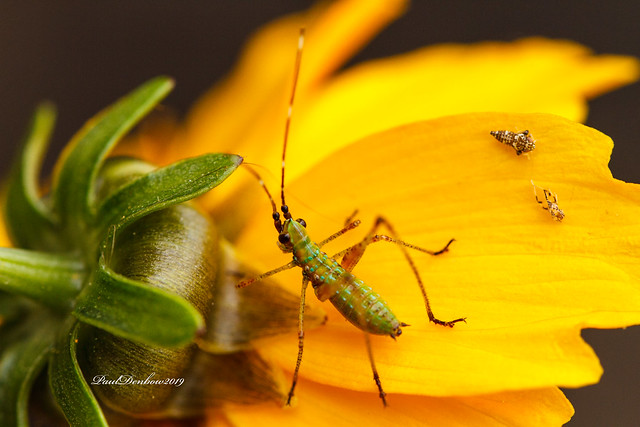 Insects on a petal
