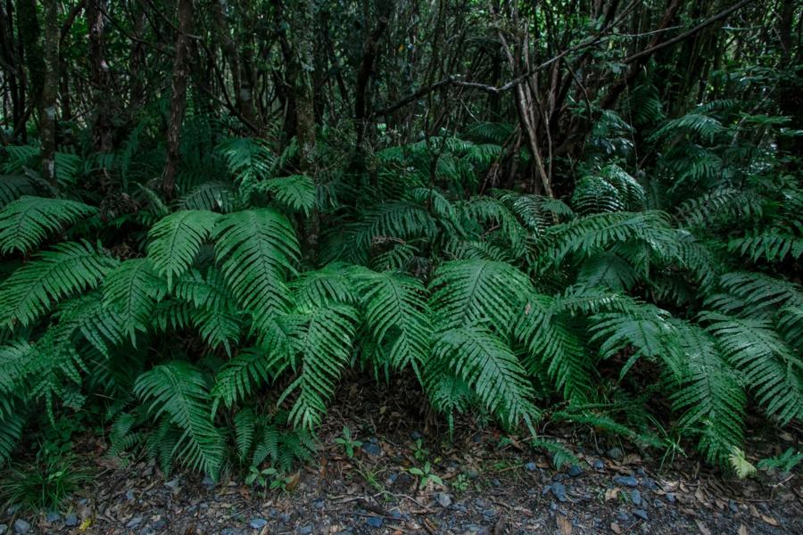 Тонгариро Новая Зеландия: национальный парк Тонгариро 47942396968 27277cc5bb o